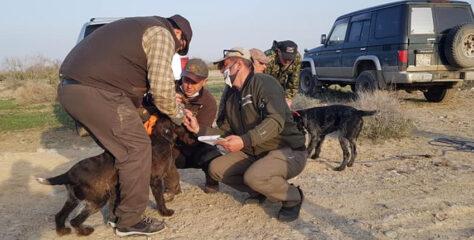 НКП «Дойч Дратхаар» проводит в Алматинской области очередные весенние испытания молодняка (VJP)