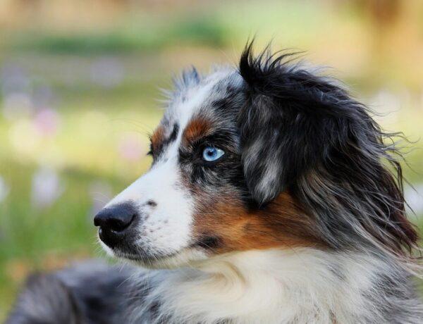 Генетика домашних животных. Локус М и его аллели