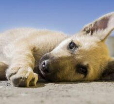 В Южной Корее заговорили о запрете на употребление собачьего мяса